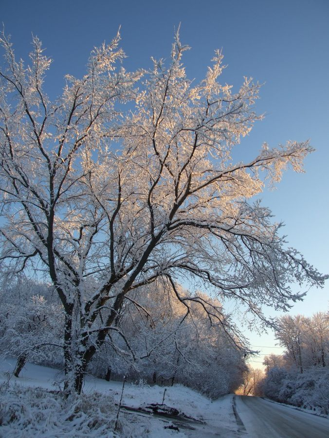 winter aragon rd tree 5 dec 09